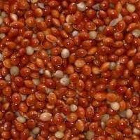 红小米 制造商