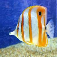 Tropical Fishes Manufacturers