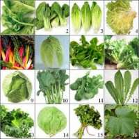 Leaf Vegetables Manufacturers