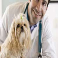 Veterinary Doctors Manufacturers