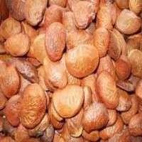 Karanja Seeds Manufacturers