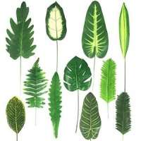 Artificial Leaves Manufacturers