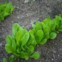 Vegetables Seedlings Manufacturers