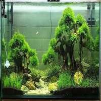 Bonsai Aquarium Manufacturers