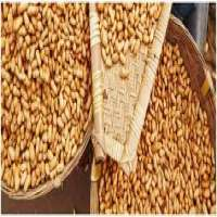 Groundnut Extraction Manufacturers