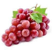 Red Globe Grape Manufacturers