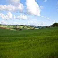 Landscape Grass Manufacturers
