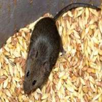 Rodent Food Manufacturers