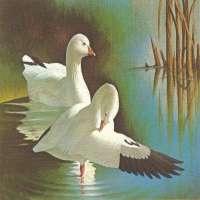 Swan Pair Manufacturers