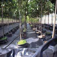 Woven Ground Cover Manufacturers