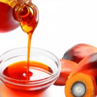 原油棕榈油 制造商