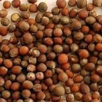 Cauliflower Seeds Manufacturers