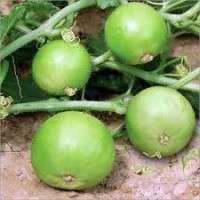 Tinda Seed Manufacturers