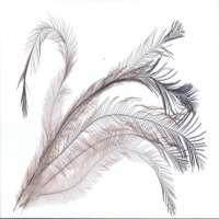 Emu Feather Manufacturers