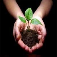 Plant Saplings Manufacturers