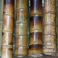 Polished Bamboo Sticks Manufacturers