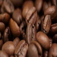Cocoa Coffee Beans Manufacturers