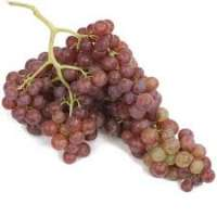 Flame Seedless Grapes Manufacturers