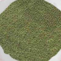 Celery Powder Manufacturers