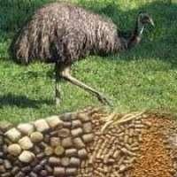 Emu Feed Manufacturers