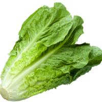 Lettuce Manufacturers