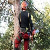 Tree Climbing Equipment Manufacturers
