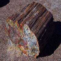 Petrified Wood Manufacturers