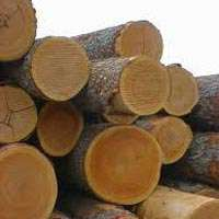 Cherry Wood Logs Manufacturers