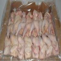 Halal Frozen Whole Chicken Importers