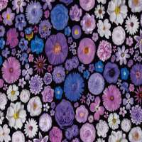 Cotton Digital Printed Fabric Manufacturers