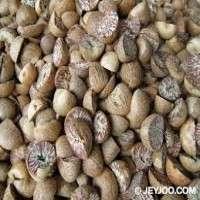 Areca Nut Manufacturers