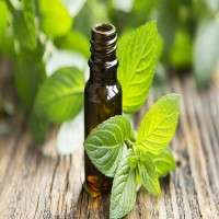 Peppermint Essential Oil Manufacturers