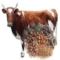 Livestock Feed Additive Manufacturers