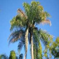 Coco Palm Tree Manufacturers
