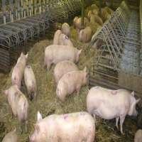 Pig Farming Manufacturers