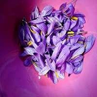 Saffron Petals Manufacturers