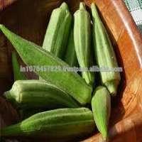 混合Bhindi种子