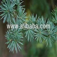 Cedrus Atlantica Essential Oil Pure And Natural
