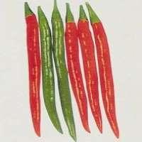 Hybrid Red Pepper Seed
