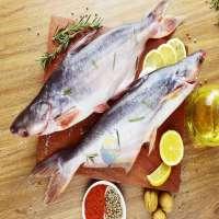 Pangasius鱼