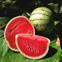 Red Fresh Watermelon