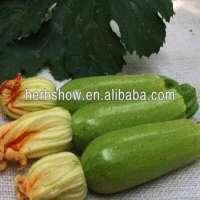 Squash Seed