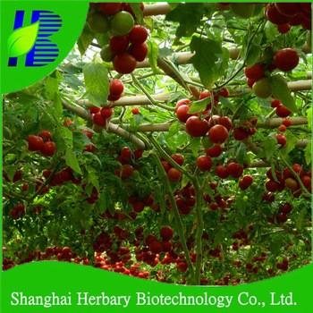 Hybrid vegetable tree tomato seeds