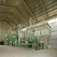 姜黄加工厂