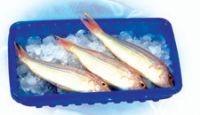 海鲜食品盒