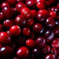 新鲜的蔓越莓