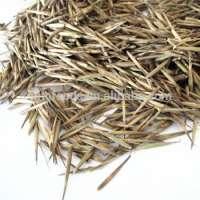 Bamboo Seeds