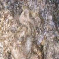 Greasy Wool