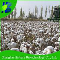 Fast Growing Colored Hybrid Cotton Seeds