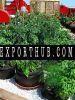 Eco Friendly Black Nonwoven Felt Fabric Smart Grow Bag Planter Pots